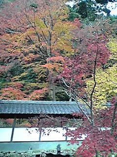 関西の日光 紅葉